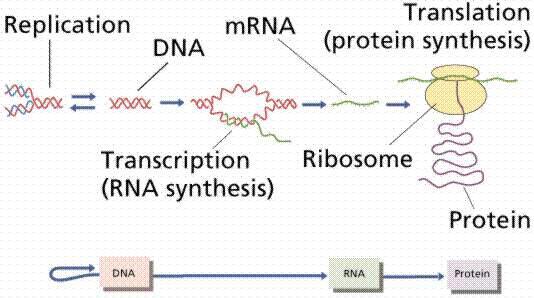 蛋白表达与纯化_涵盖服务内容/原理/操作/faq/资料