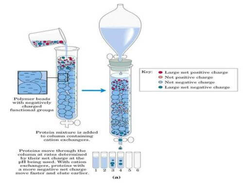 离子交换色谱纯化原理