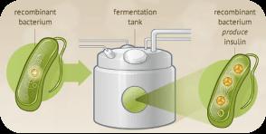 大肠杆菌蛋白发酵大规模制备