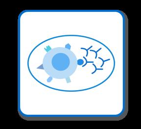 单克隆抗体制备服务