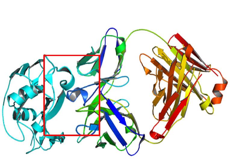 蛋白和抗体相互作用