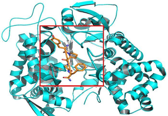 蛋白和小分子相互作用