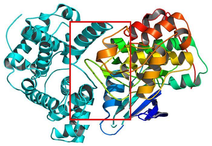 蛋白和蛋白相互作用