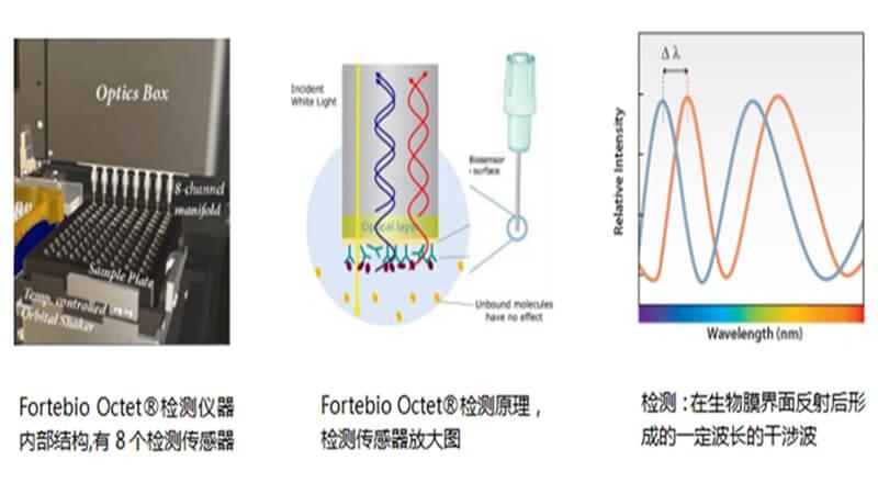 Fortebio Octet®实验原理
