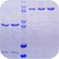 蛋白纯化服务