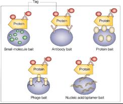 蛋白质芯片技术Protein microarrays