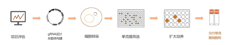 稳定细胞株构建服务流程