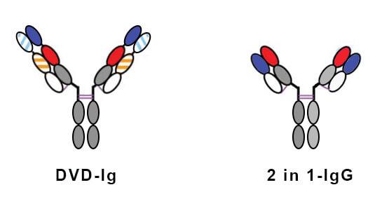 抗原抗体特异性结合_双特异性抗体种类-BITE-DART-双特异性抗体特点-德泰生物