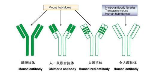 抗体人源化发展历程